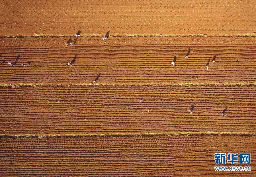 (經濟)(1)云南沾益:農民春耕播種忙