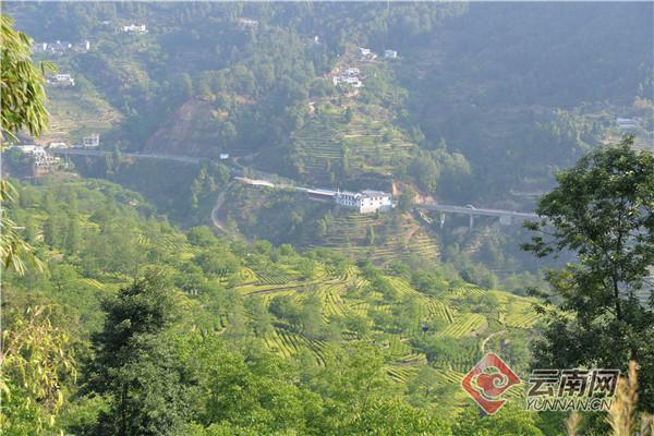 中国滇红第一村——云南凤庆安石村